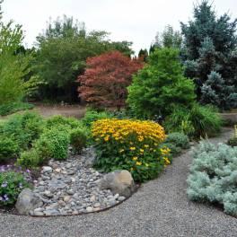 Кустарники, деревца и лилианы
